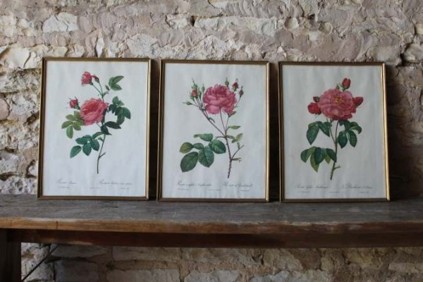 Oude Botanische Prenten : Oude vintage brocante botanische prenten rozen beau co