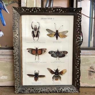Brocante lijst met oude prent van insecten