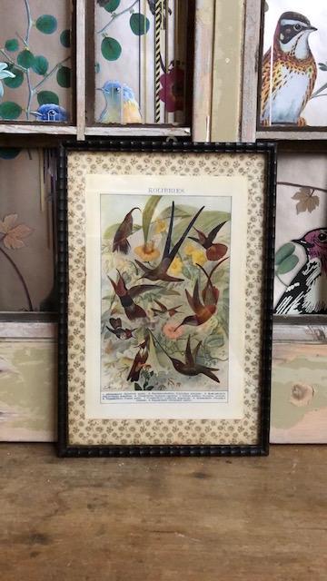Faux bamnoe lijst met oude prent met kolibries