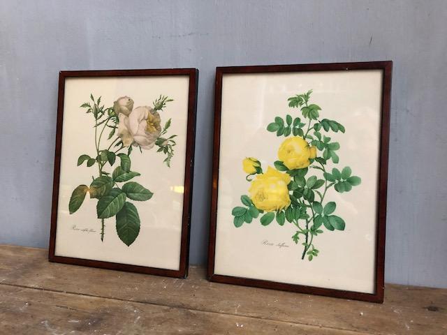vintage rozenschillderijtjes