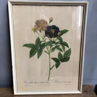 Vintage rozen schilderij Redoute