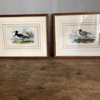 Set klassieke schilderijtjes met vogels