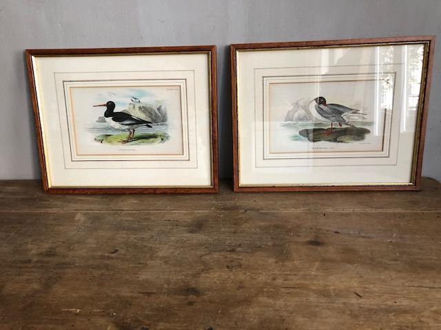 set klassieke vogel schilderijtjes