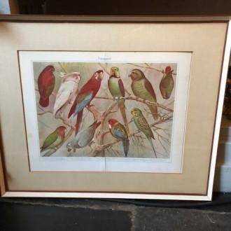 Brocante schilderij met oude prent van papagaaien