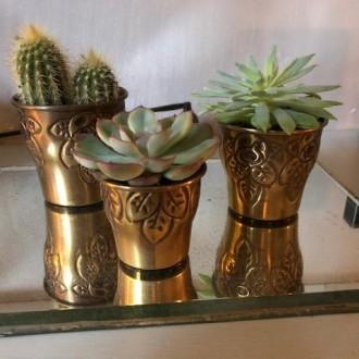 Drie oude potjes met cactussen