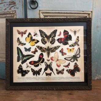 Sale: Oude Franse lijst met vlinders