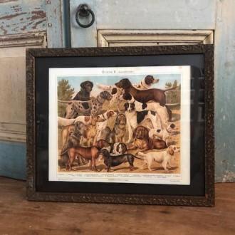 Sale: Oude Franse lijst met hondenverzameling
